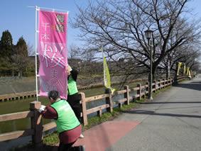 下条川千本桜まつりの準備